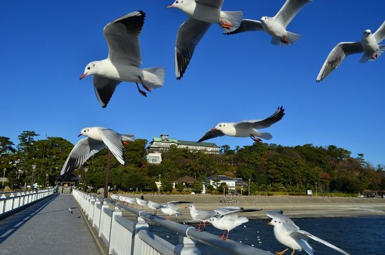 Gamagori Takeshima: 竹島方面から