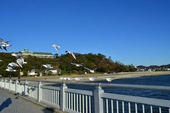 Gamagori Takeshima: 竹島橋に集まるゆりかもめ