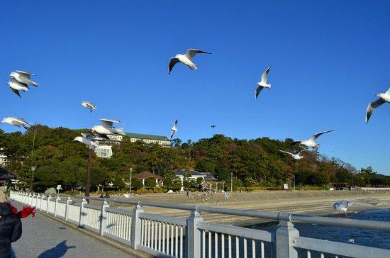 Gamagori Takeshima: 竹島付近のゆりかもめ