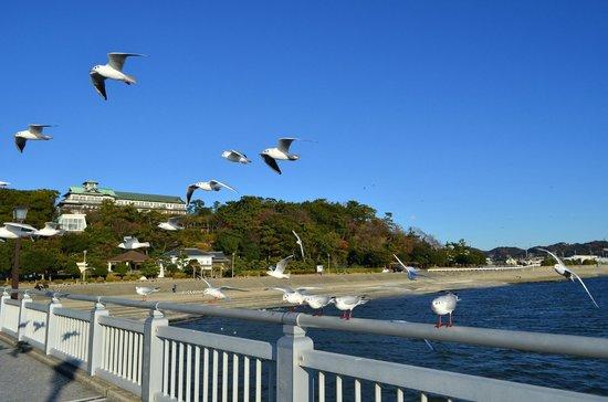 Gamagori Takeshima: 竹島橋