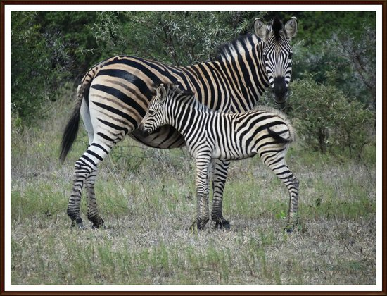 Elandela Private Game Reserve: MOST OF THE ANIMALS HAS BABIES!