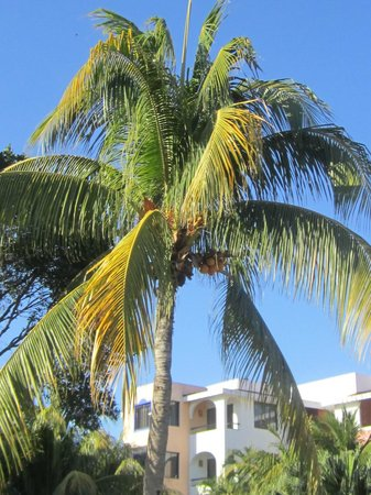 Real Playa del Carmen: lovely palm trees