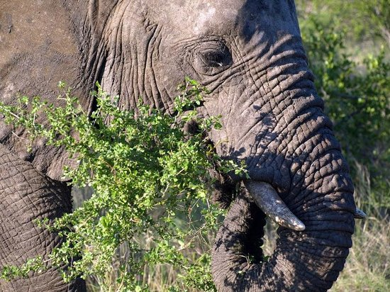 Pondoro Game Lodge: Elephant