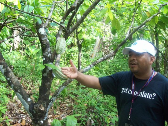 IXCACAO Maya Belizean Chocolate: Juan, owner, operator, educator, guide, and master organic farmer