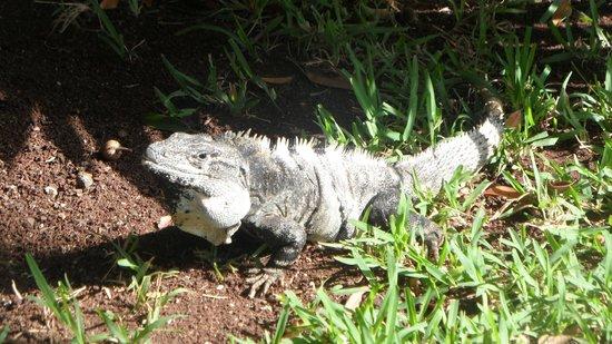 Hotel Riu Lupita: Wildlife