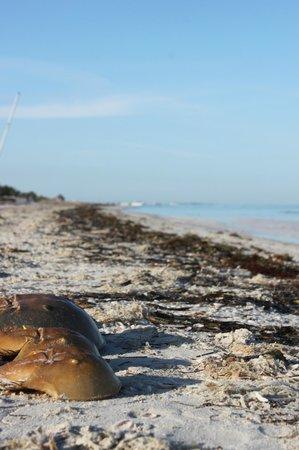 Casa Iguana Holbox: Sus playas paradisiacas aun se mantienen tranquilas
