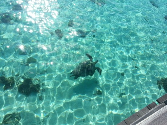 Pom Pom Island Resort & Spa: Spotted the turtle from the jetty on a Sunday morning