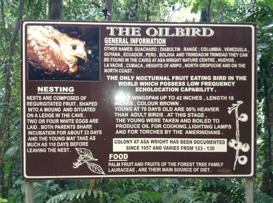 Asa Wright Nature Centre and Lodge: Oil Bird sign on way to the cave which is on Asa Wright property