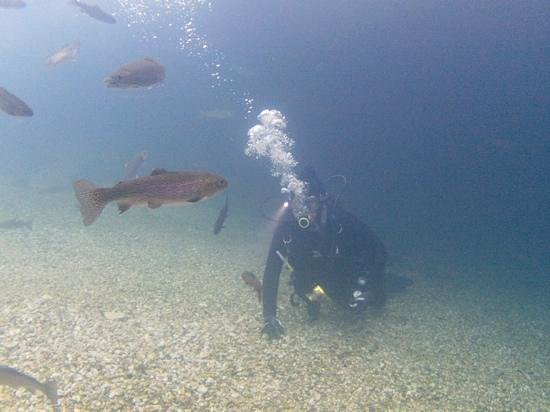 Me 40 39 below the surface bennett springs allows diving of for Bennett springs trout fishing
