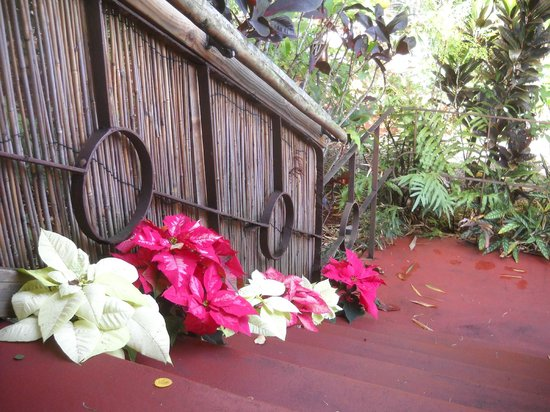 Hilo Bay Hale Bed & Breakfast: poinsettias for Christmas!