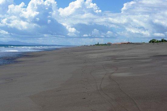 Hotel Las Olas Beach Resort: Beach