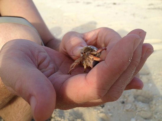 Bimini Sands Resort and Marina: HERMIT CRAB