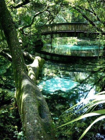 Silver Springs, FL: Fern Hammock at Juniper Springs Recreation Area