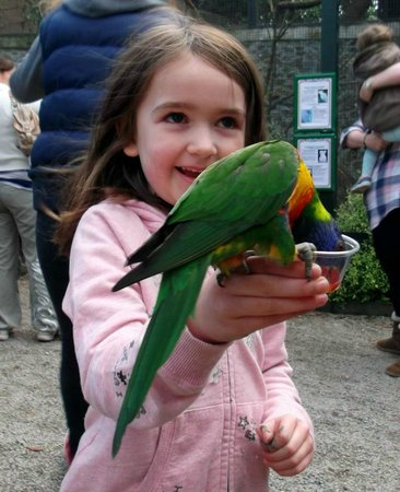 Paradise Park: my sister with a lorikeet