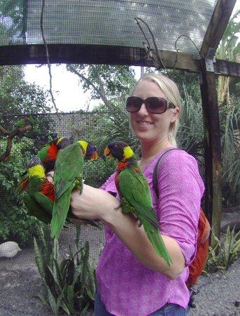 Tampa's Lowry Park Zoo: bird feeding (1 of 2 aviaries where you can feed birds)