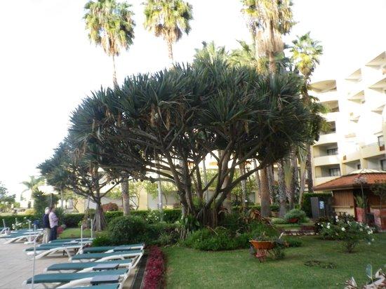 Suite Hotel Eden Mar: Eden Mar Gardens