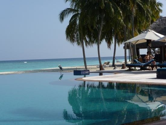 Veligandu Island Resort & Spa: pool