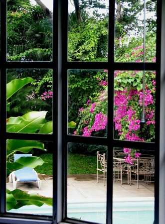 The Blue House Boutique Bed & Breakfast: The spectacular profusion of tropical vegetation can be enjoyed from all our bedrooms.
