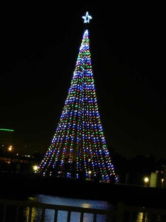 Moody Gardens:                   A tree of lights across the bay