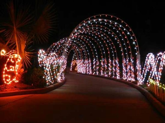 Moody Gardens:                   A tunnel of lights to walk through