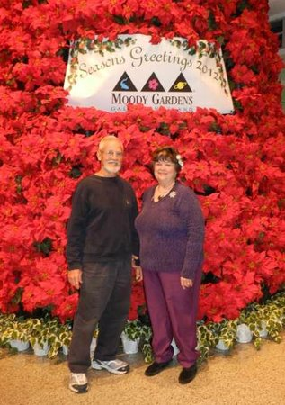 Moody Gardens:                   Another guest took our picture in front of the huge tree made from poinsettia