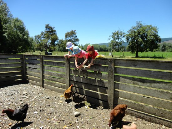 Quinney's Bush Camp: Feeding the chickens at Quinney Farm Park