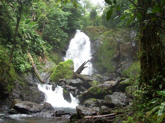 Casa Corcovado Jungle Lodge: Cascada en el bosque primario