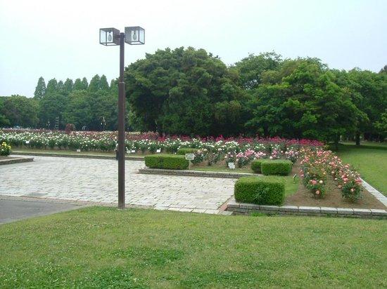 Shonai Green : バラ園1