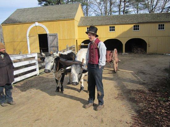 Old Sturbridge Village: training oxen