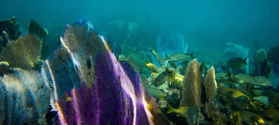 Sian Ka'an, Mexico: Barrier reef