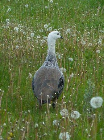 Parque Nacional Tierra del Fuego: Some of the wildlife in the area