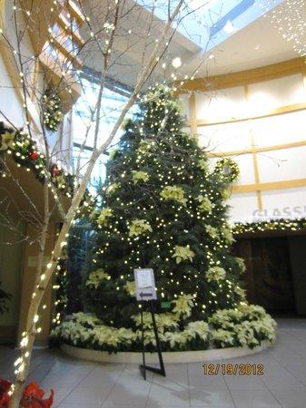 A6 Picture Of Cleveland Botanical Garden Cleveland Tripadvisor