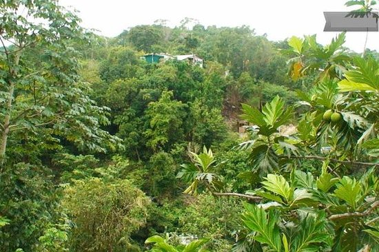 Jah Billy's Irie Ites Guesthouse: The view from Irie Ites Guesthouse