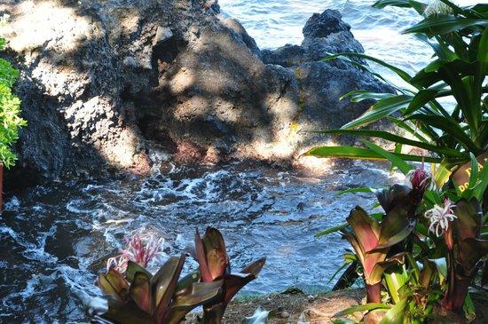 Hawaii Tropical Botanical Garden : Onomea Bay