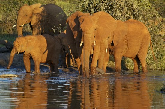 Mosetlha Bush Camp & Eco Lodge: Elephants at the watering hole