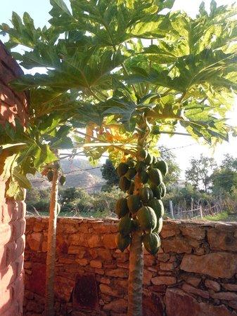 Sukha's Place : Fresh fruits