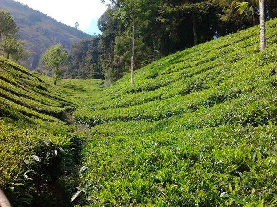 Camp Noel: Tea garden