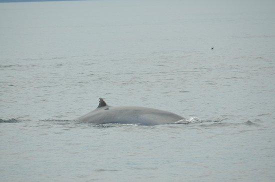 Administracion Turistica del Parque Nacional Galapagos: Whale watching