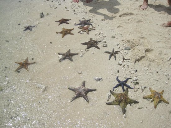 Nakupenda Beach: Stelle marine