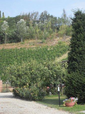 La Giribaldina: Giardino e vigneti
