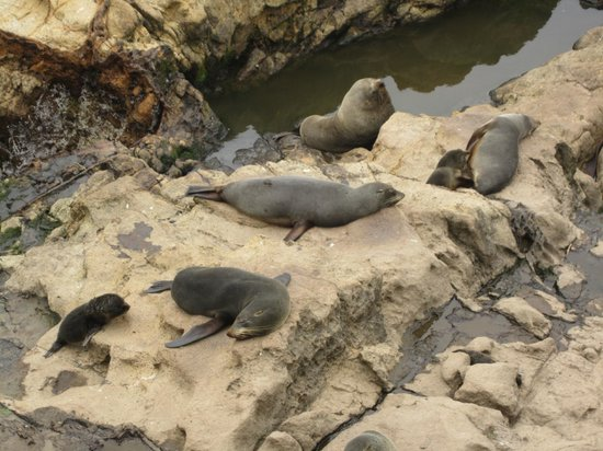 Awesome Tours: seal