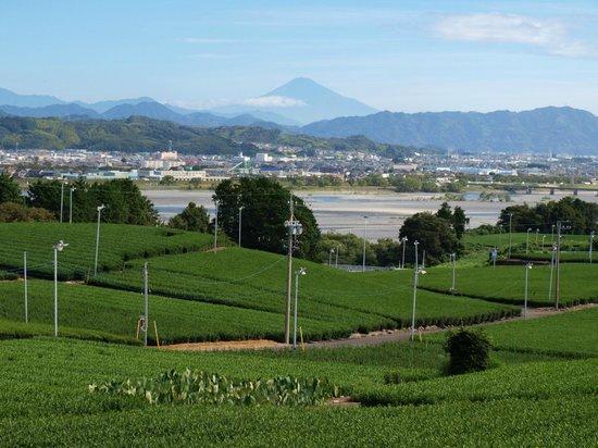 Restaurantes en Shimada