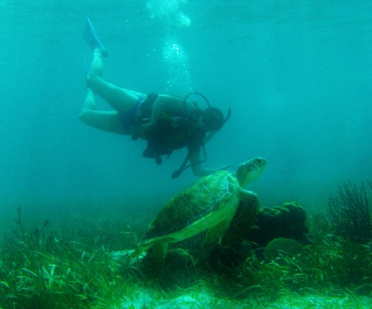 Belize Pro Dive Center: Kristi and her new friend at the Hol Chane Marine Reserve