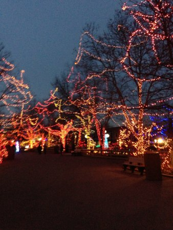 indianapolis zoo forest of christmas lights was amazing