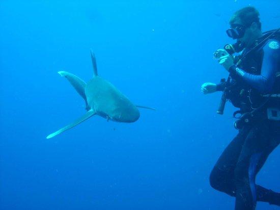 Elphinstone Reef : Oceanic shark