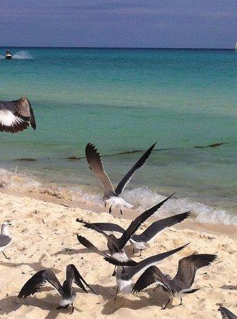 Iberostar Quetzal Playacar: La spiaggia