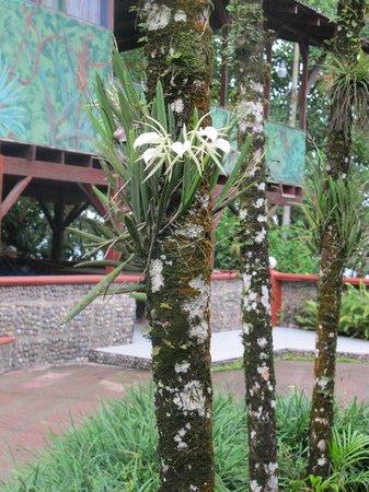 Hotel Rustico de Playa Perla Negra: partie du jardin
