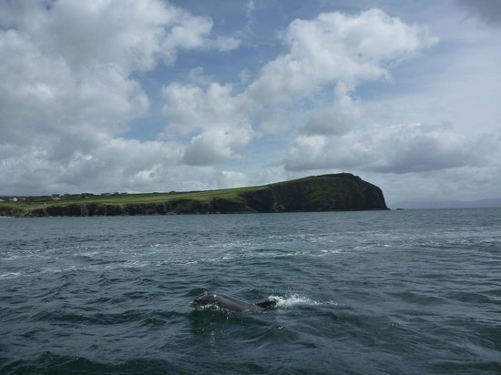 Dingle Boat Tours Tripadvisor