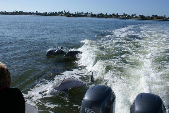 Sea Shell Boat Tours