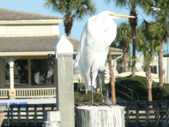 Blue Heron Inn - Amelia Island: You watching me?